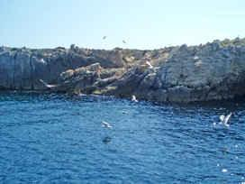 Seagull colony, northen Adriatic, Croatia
